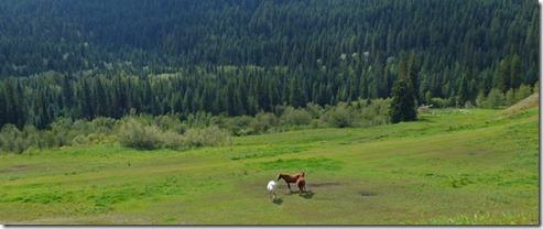 Horses along Cariboo Highway, BC
