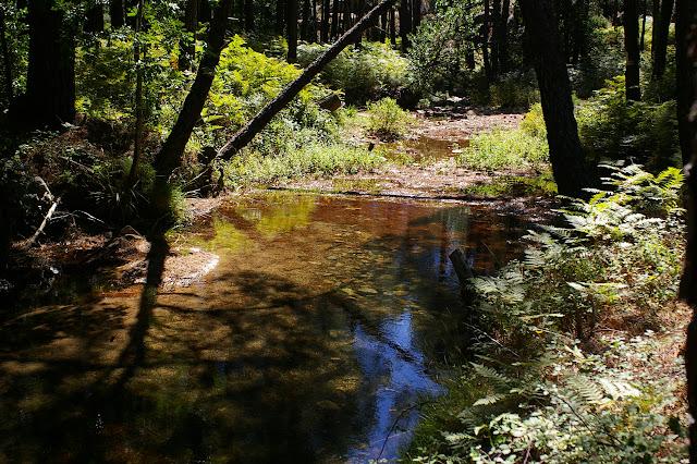 Ruisseau de Petra Plana au Nord de L'Ospedale (920 m), Corse du Sud, août 2006. Photo : J.-M. Gayman