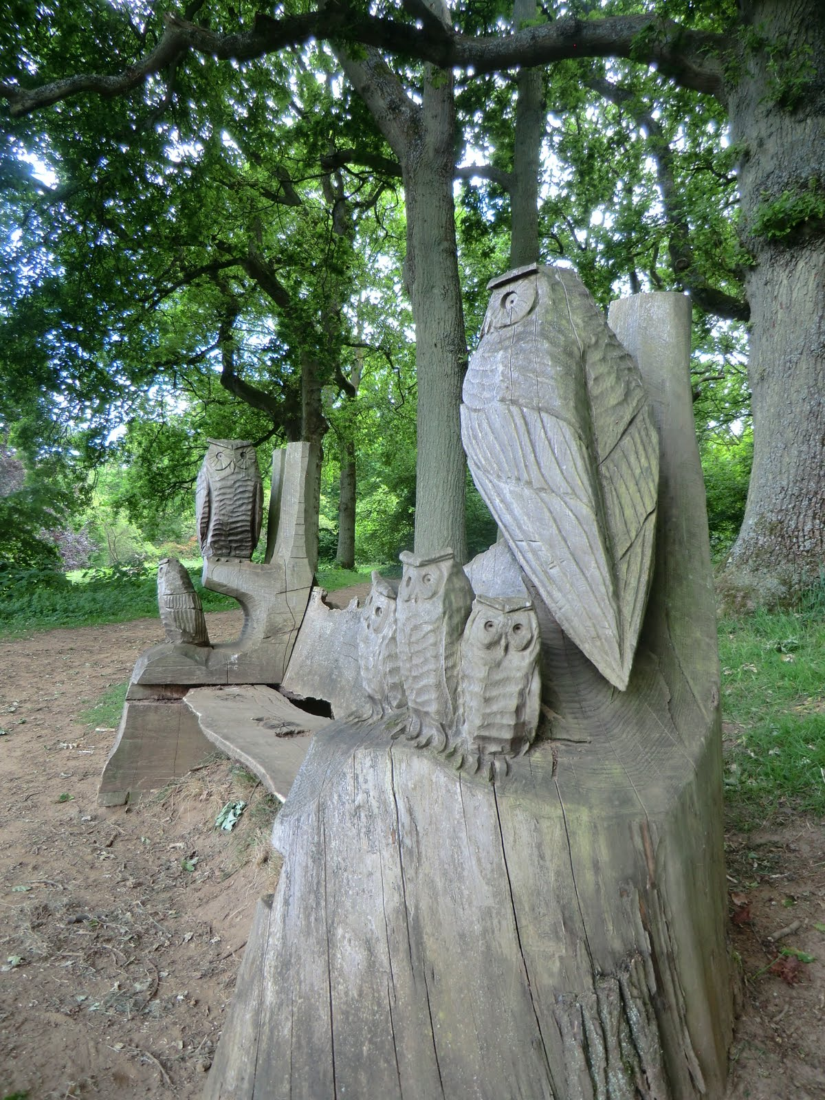 CIMG8412 Owl sculpture, Winkworth Arboretum