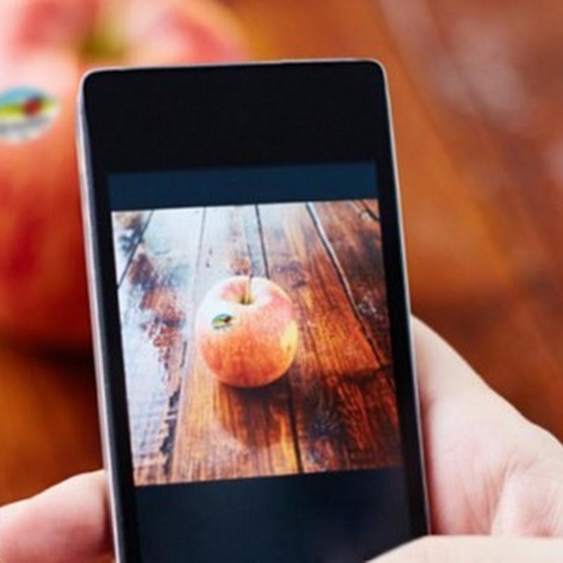 Con RaccontaMela, basta un clic per ottenere l'identikit delle mele.