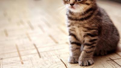 Pecinta Kucing itu Pasangan Idaman, Benarkah?