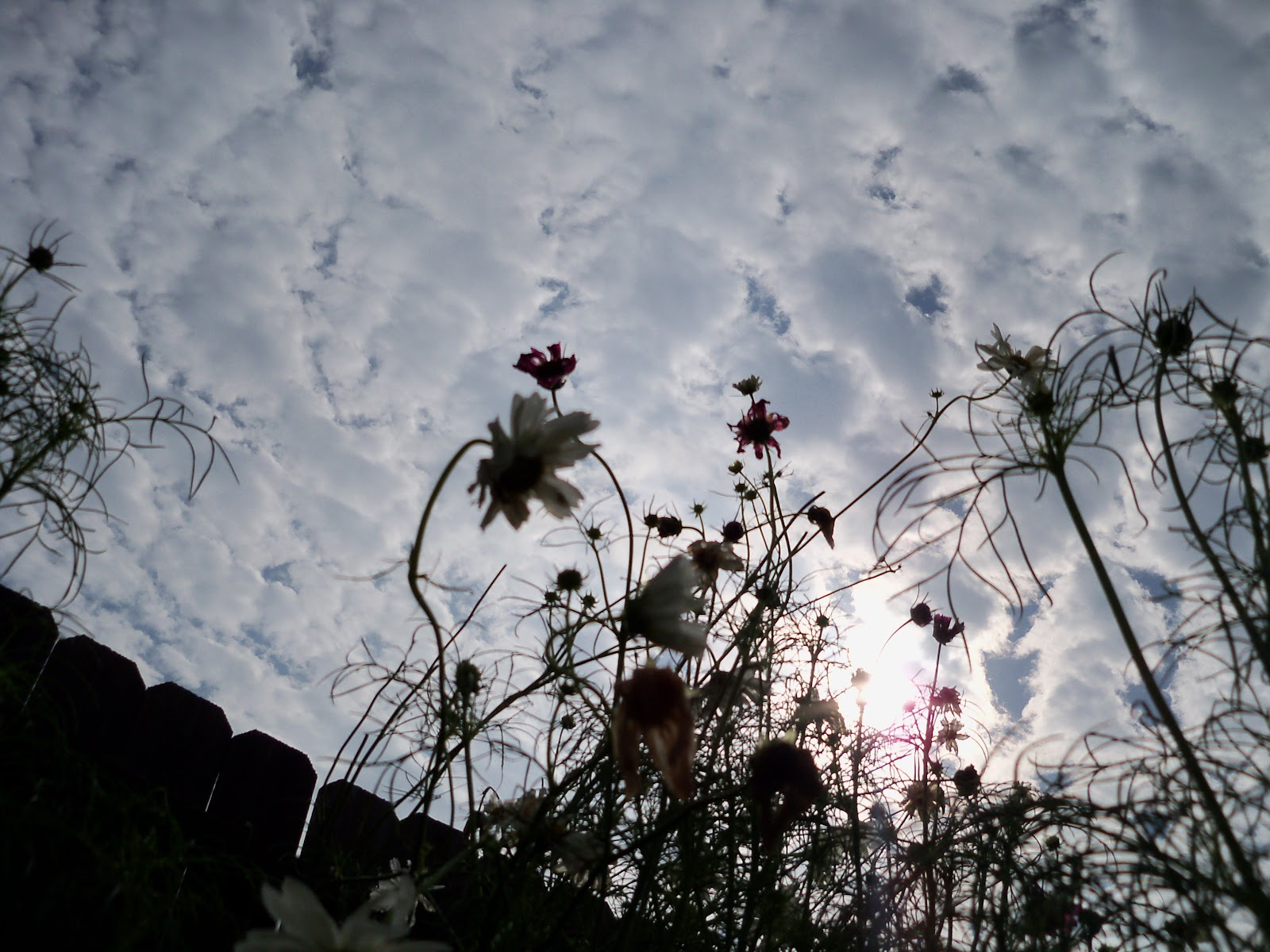 Gardening 2010, Part Three - 101_4690.JPG
