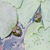 two-frogs_MG_9884-copy.jpg