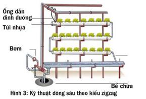 Các cách trồng rau thủy canh - 56874bc0cc460
