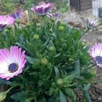 primavera-luminasioIMAG0205.jpg