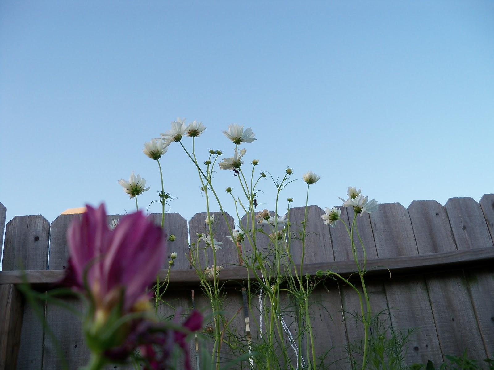 Gardening 2010, Part Three - 101_3953.JPG