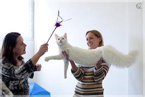 cats-show-24-03-2012-fife-spb-www.coonplanet.ru-112.jpg