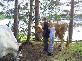 Viktor och Ida och kor!