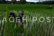 Babinsa Koramil 05/Indra Jaya Bantu Petani Bersihkan Hama Keong