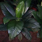 Cultivo de plantas de interior. - 100_0866.JPG