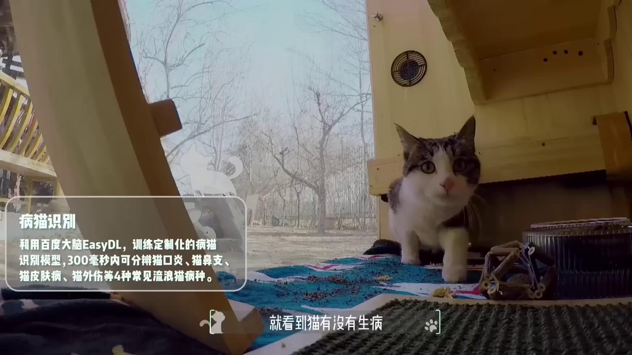 Китайский инженер построил умный дом для котиков с распознаванием лиц