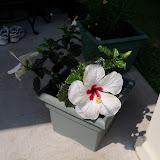 Gardening 2010 - 101_1755.JPG