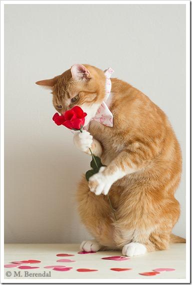 Teddy_Valentine_2_01