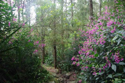 La forêt dense.