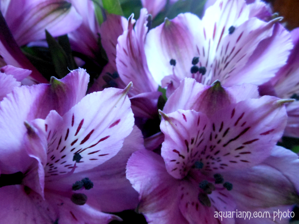 Purple Flowers Bouquet Photo