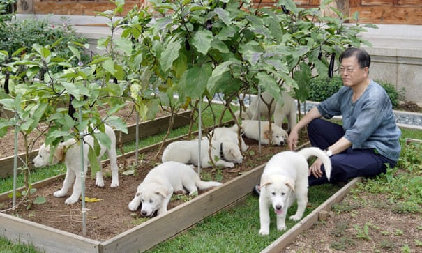 South Korean president Moon Jae-in suggests ban on eating dog meat in the country