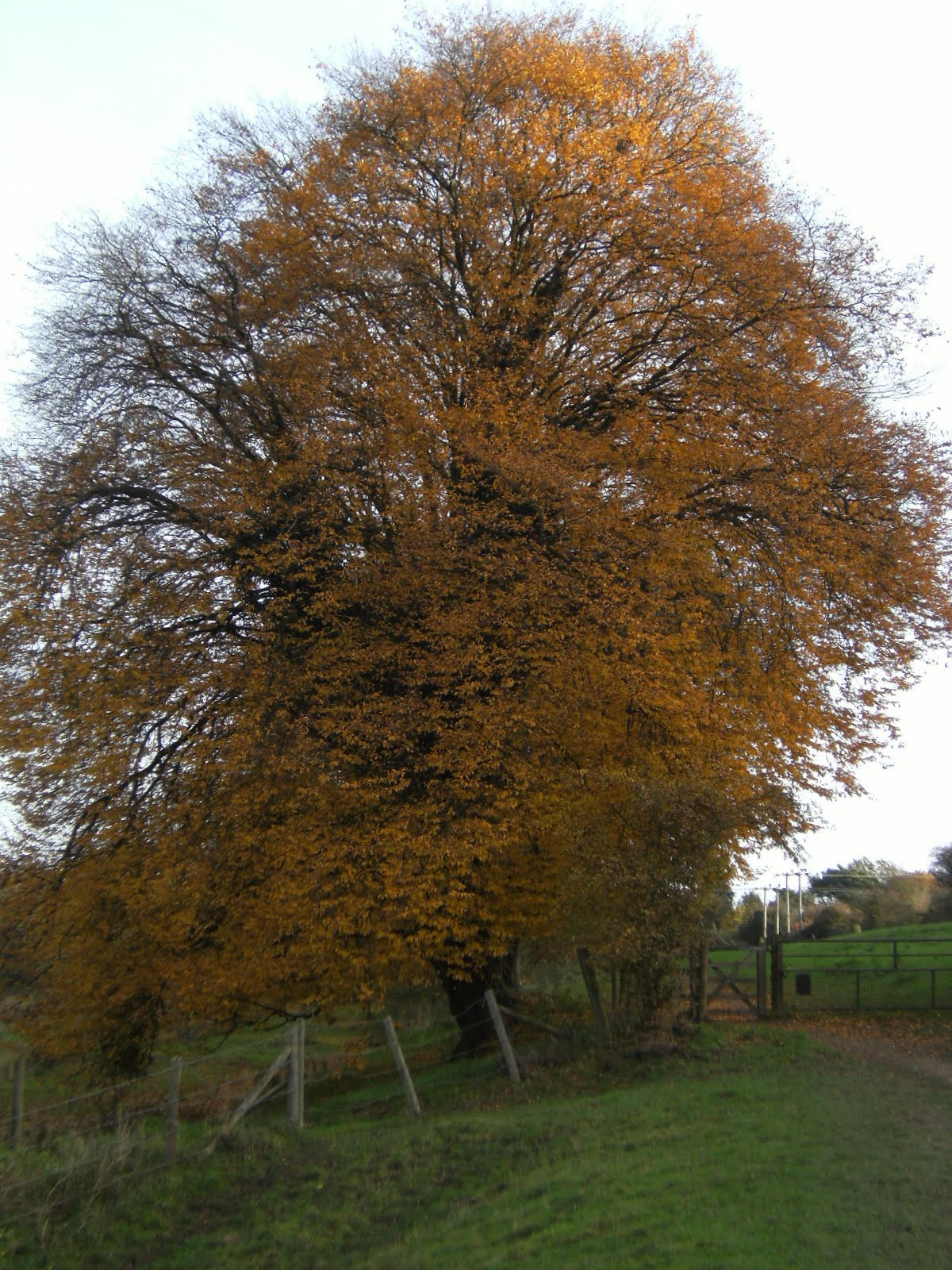 1011040050 Autumn colours in Cock Marsh