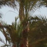 Egypte-2012 - IMG_4090.JPG