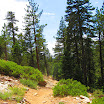 cannell_trail_IMG_1853.jpg