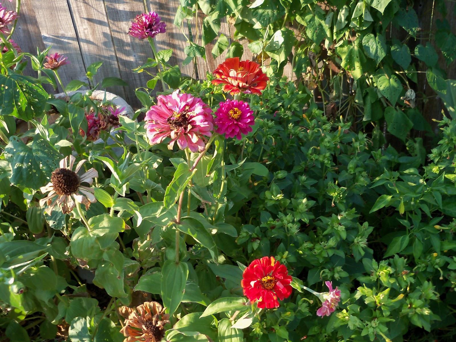Gardening 2011 - 100_9234.JPG
