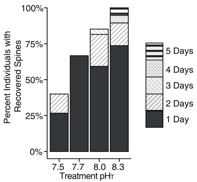 Percentage of individual foraminifera that regrew spines at each of four pH conditions. The number of days between experiment start and regrowth are shown in patterned bars. After 5 days, significant differences were found between foraminifera exposed to pH 7.5 vs. pH 8.0 and 8.3 (ANOVA; F3,83 = 13.64; p-value < 0.01). Graphic: Davis, et al., 2017 / Scientific Reports