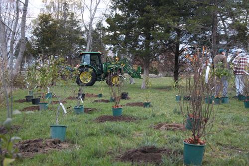 Hammo Fall Planting - Jim Murtagh - BC3G2512.jpg