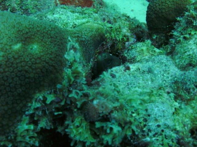 Bonaire 2011 - PICT0209.JPG
