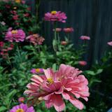 Gardening 2011 - 100_9362.JPG