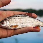 20140612_Fishing_BasivKut_001.jpg