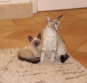 Cherry's Kitten Zorro - Rehomed Portimao, Portugal