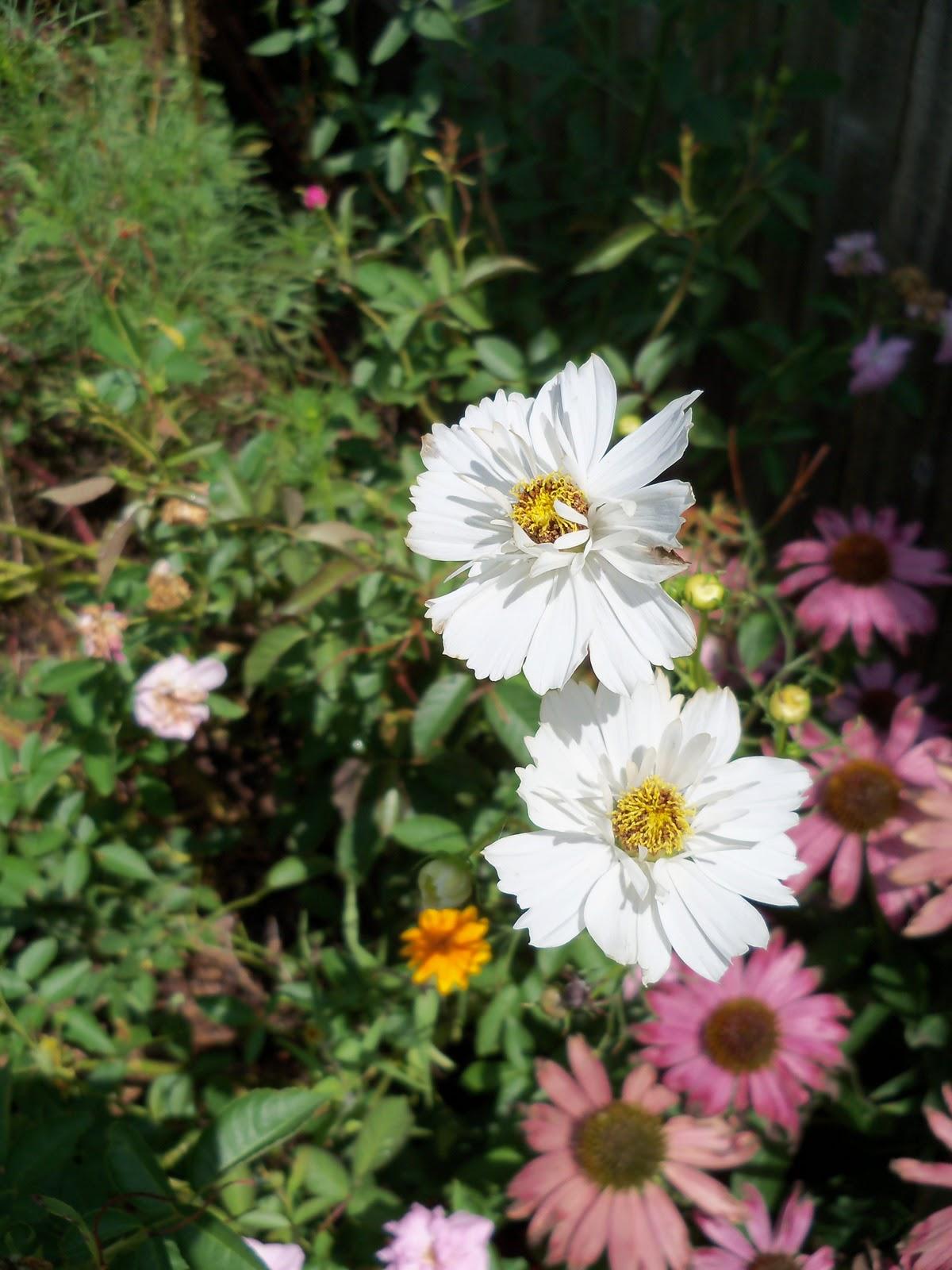 Gardening 2010, Part Three - 101_5095.JPG