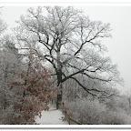 erdő, zúzmara 032.jpg