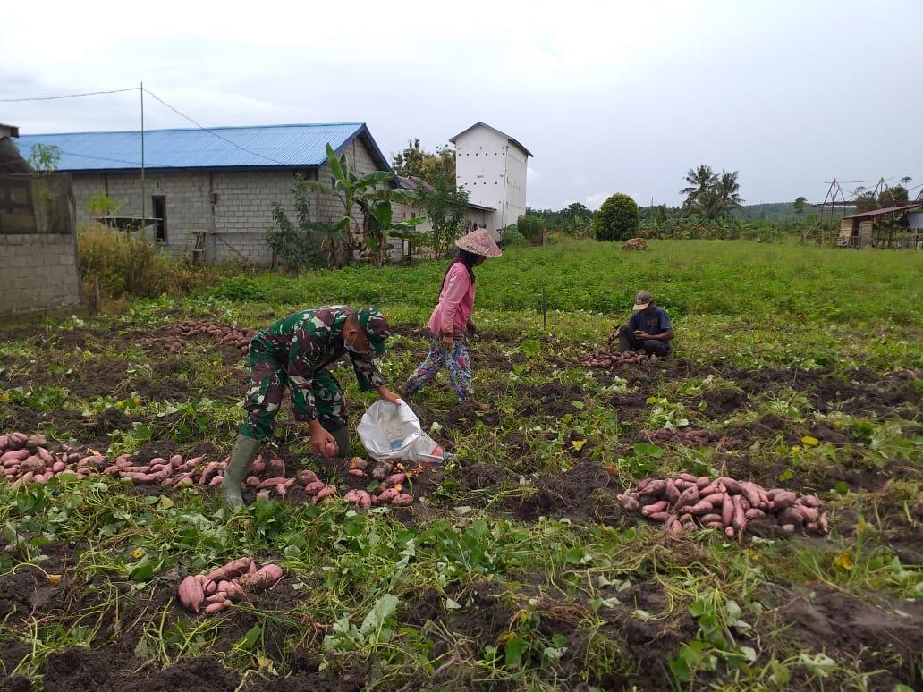 Ditengah Pandemi Covid-19,  Jajaran Kodim 0913/PPU Terus Dampingi Kelompok Tani di Wilayah Binaan Perkuat Ketahanan Pangan