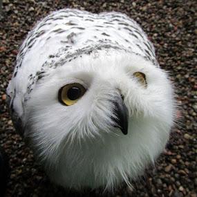 Fetlar by Welsh Hawk - Animals Other Mammals