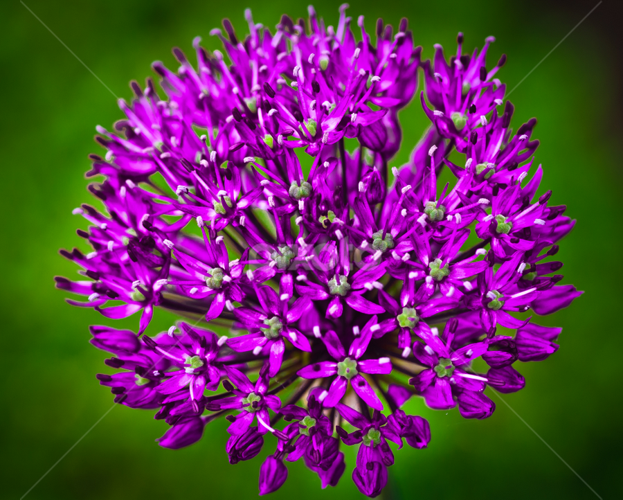 by Darrell Raw - Nature Up Close Flowers - 2011-2013