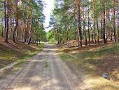 Лесные дороги в Холодном Яру
