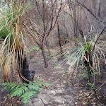 Through the bush (124600)