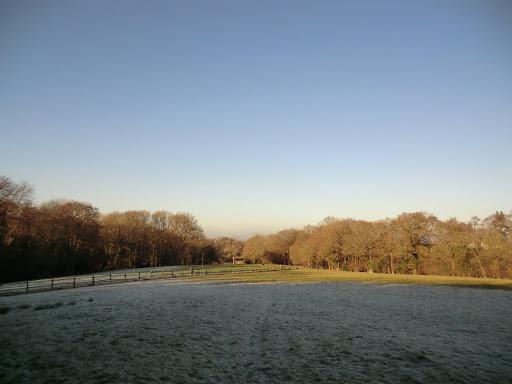 CIMG5024 Winter sunlight at Ockhams