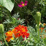 Gardening 2010, Part Three - 101_4386.JPG