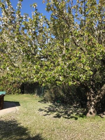 la maison du faucon point cerisier le vert remplace le blanc. Black Bedroom Furniture Sets. Home Design Ideas