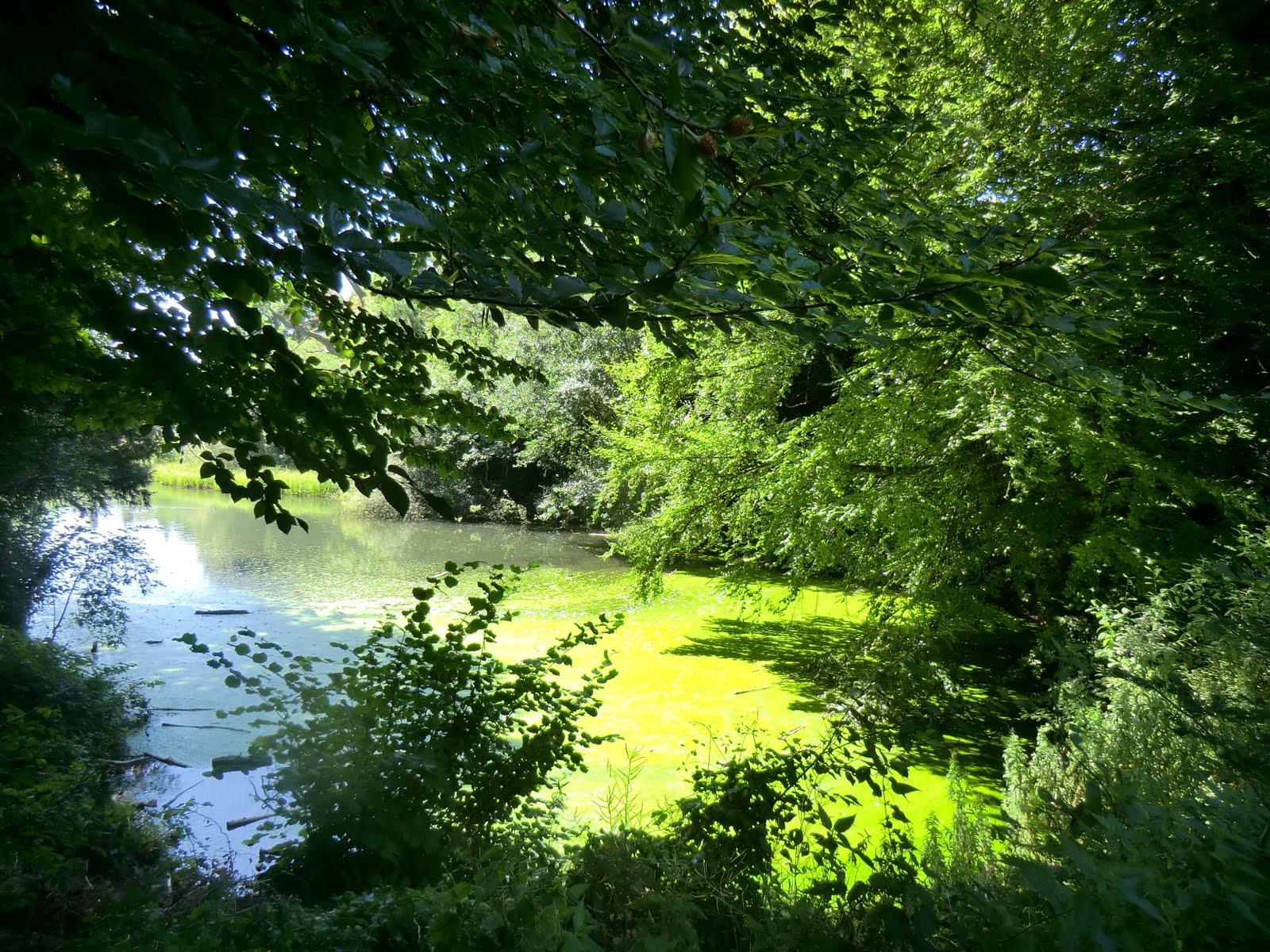 CIMG8490 Sherbourne Pond