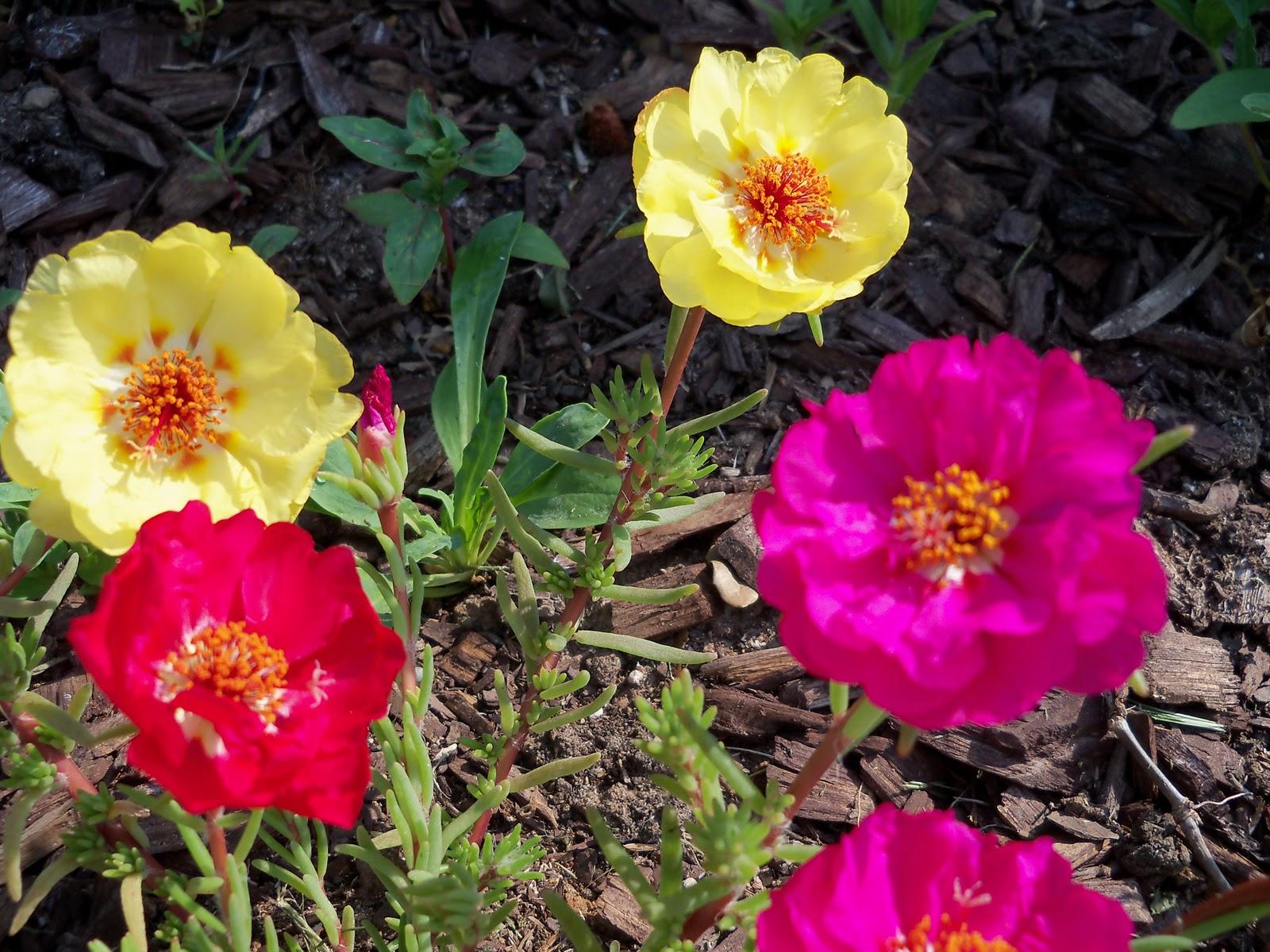 Gardening 2010, Part Two - 101_1848.JPG