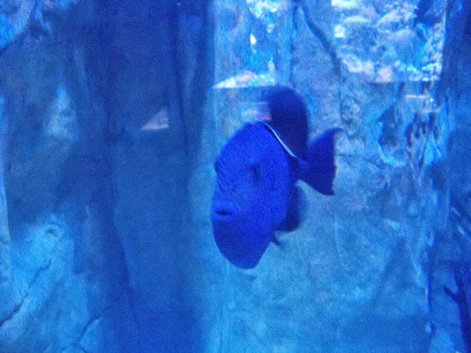 Downtown Aquarium - 116_3861.JPG