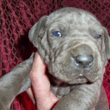 Blue girl 2 @ 3 weeks