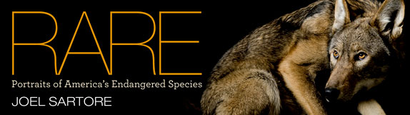coluna zero, fotografia, photo, foto, national geographic, rare, joel sartore, extinction