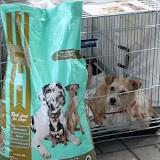 Thank you - Algarve Dog Show