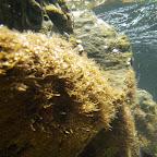 Vista submarina de uno de los pozos del acuario