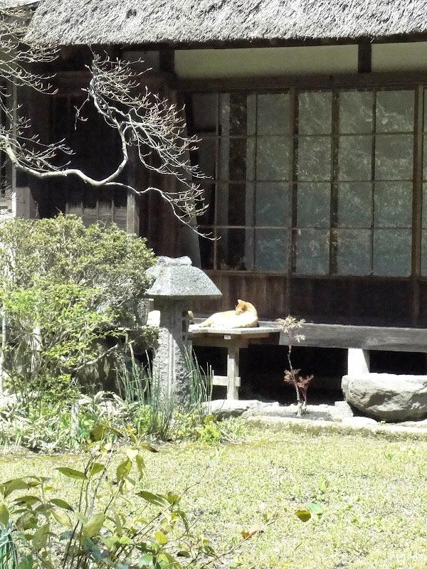 2014 Japan - Dag 6 - roosje-DSC01507-0050.JPG
