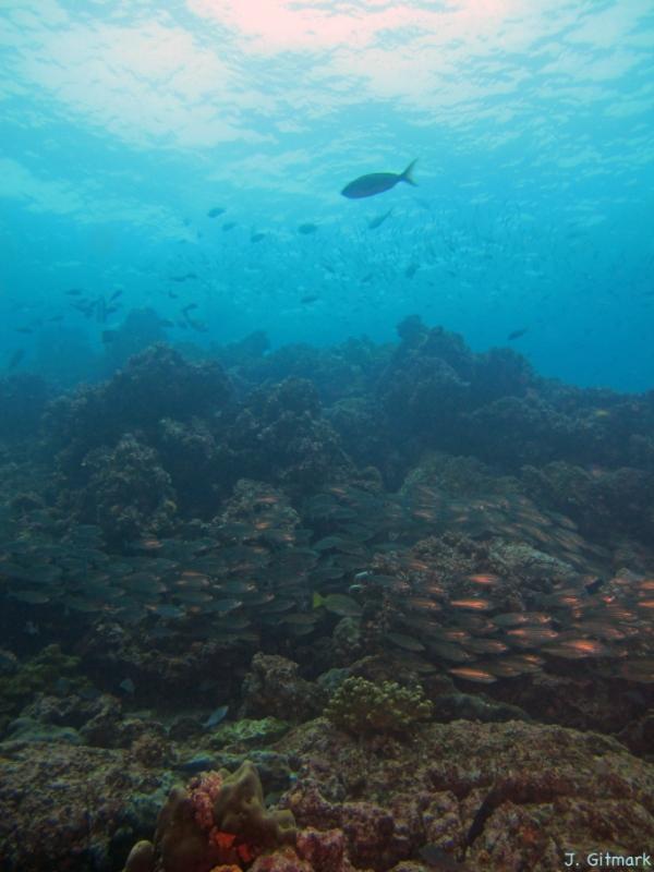 Cabo%20Marshall_Galapagos