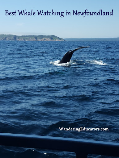 Best Whale Watching in Newfoundland